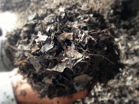 Mitrasari teak leaf mold