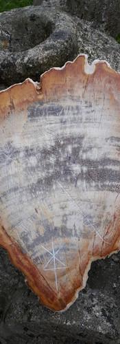 Bois fossile gravé Runes cosmiques