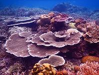 table coral garden