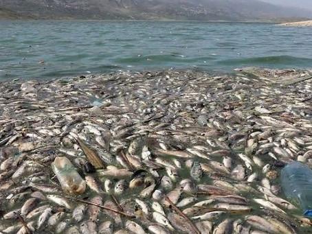 Экологическая катастрофа в Ливане стала причиной массовой гибели рыбы