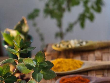 Temperos da Índia: quais são os principais temperos utilizados na culinária indiana?