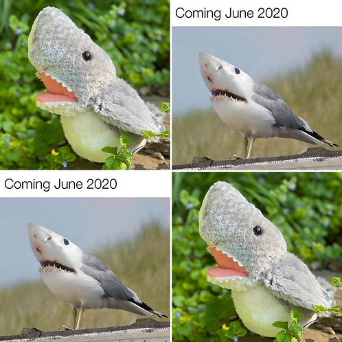 Famous meme Seagull/Shark
