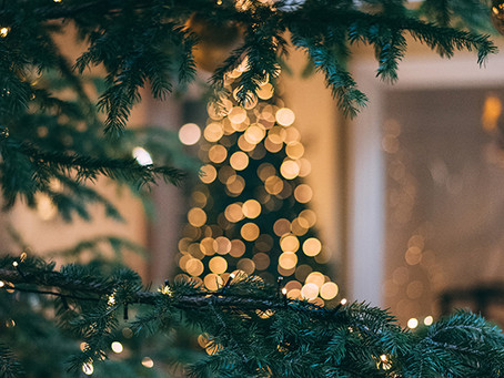 Your guide to finding the perfect Christmas tree - by Adrian, Nursery Manager