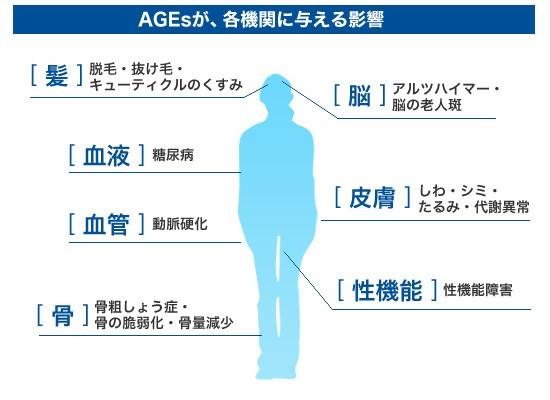 AGEsが各機関に与える影響