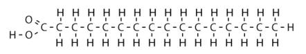 脂肪酸の分子構造
