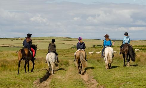 2021-06-23 10_29_51-horse riding north d