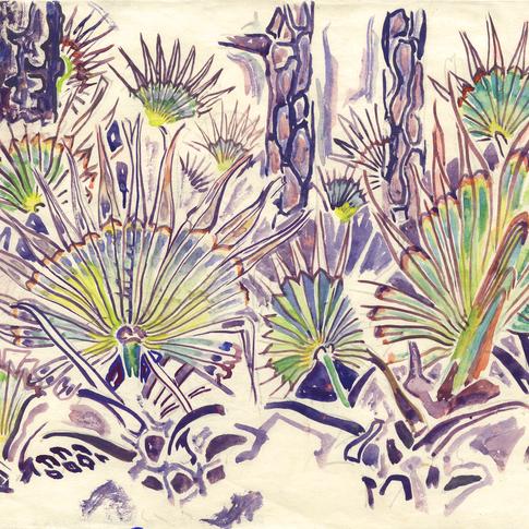 Palmettos and Pines