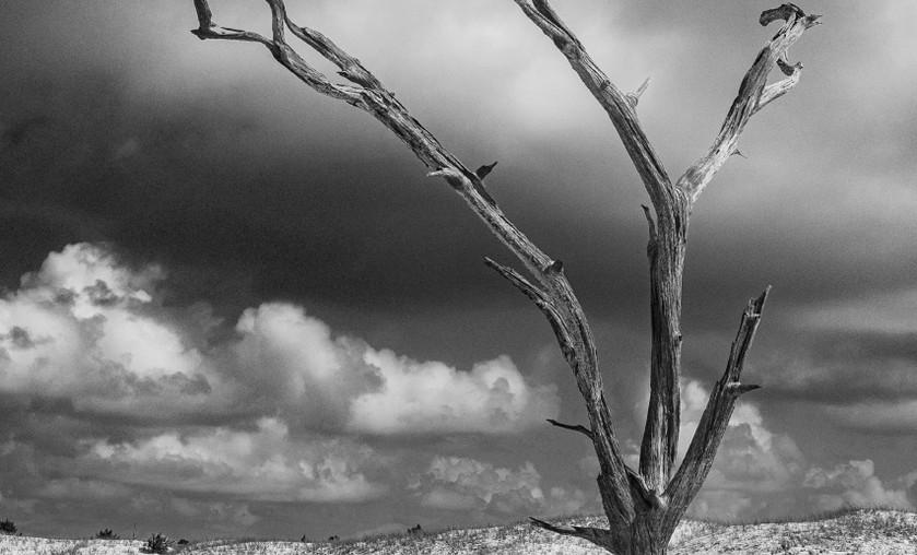 Walter's Island, Carey's Tree