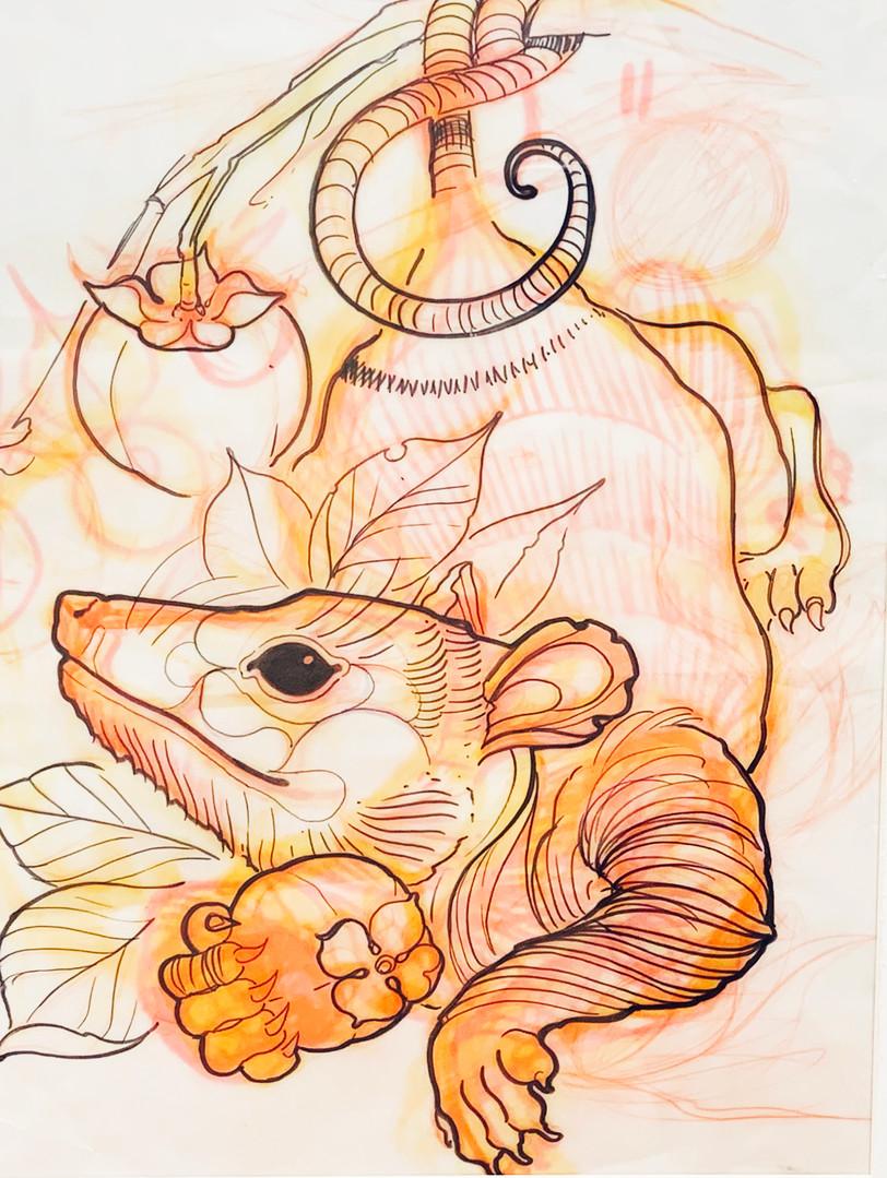 Possum and Persimmon