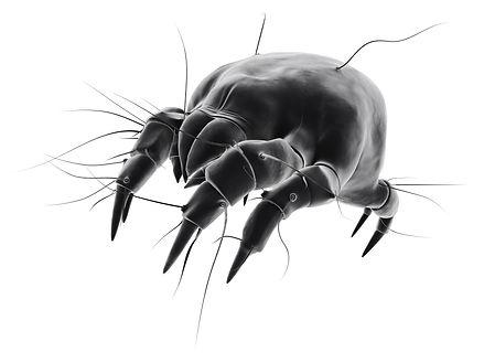 isolated mite.jpg