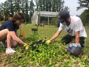 Zero Impact Gardening with the Chi Chapter at the University of North Florida