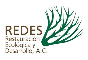 logo-redes_highres.jpg
