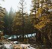 Córrego da floresta