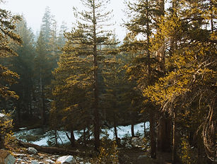Secuencia del bosque