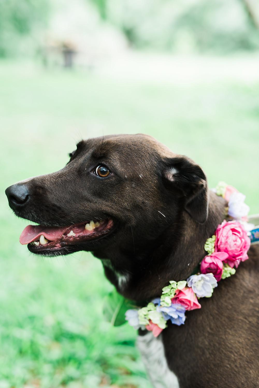Our shop dog, Bleu, wearing her beautiful flower collar!