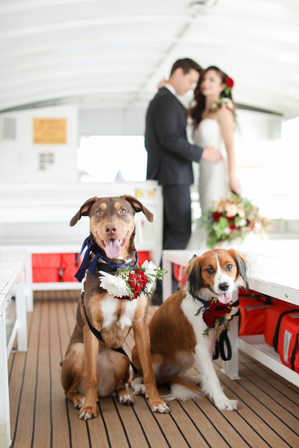 Two good dogs wearing their flower collars and their newlywed owners embrace behind them.
