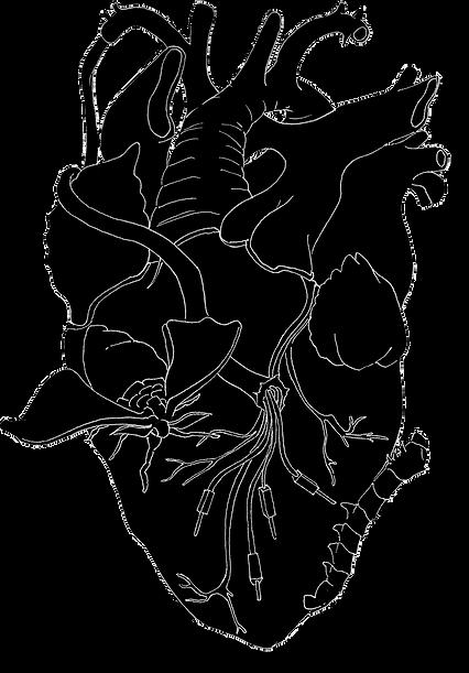 logo-papillocoeur.tif