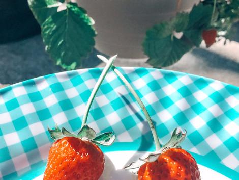 Growing Strawberries in My Micro RV Garden