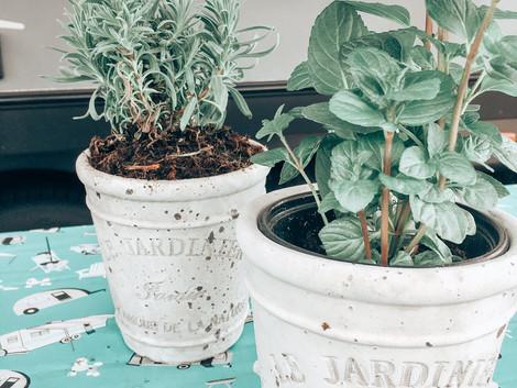 RV Gardening: Start Small