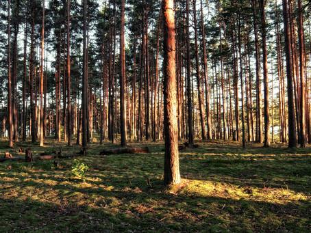 Особо охраняемые природные территории проводят профилактические работы для предупреждения лесных пож