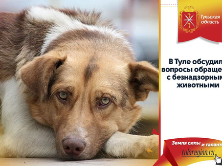 В Туле обсудили вопросы обращения с безнадзорными животными