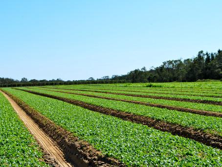 Экологическое земледелие: роскошь или необходимость?