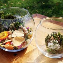 Glass Bowl Vases