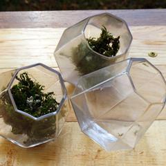 Geometric Glass Vase