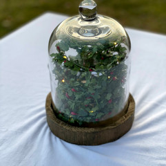 Glass and Wood Cloche
