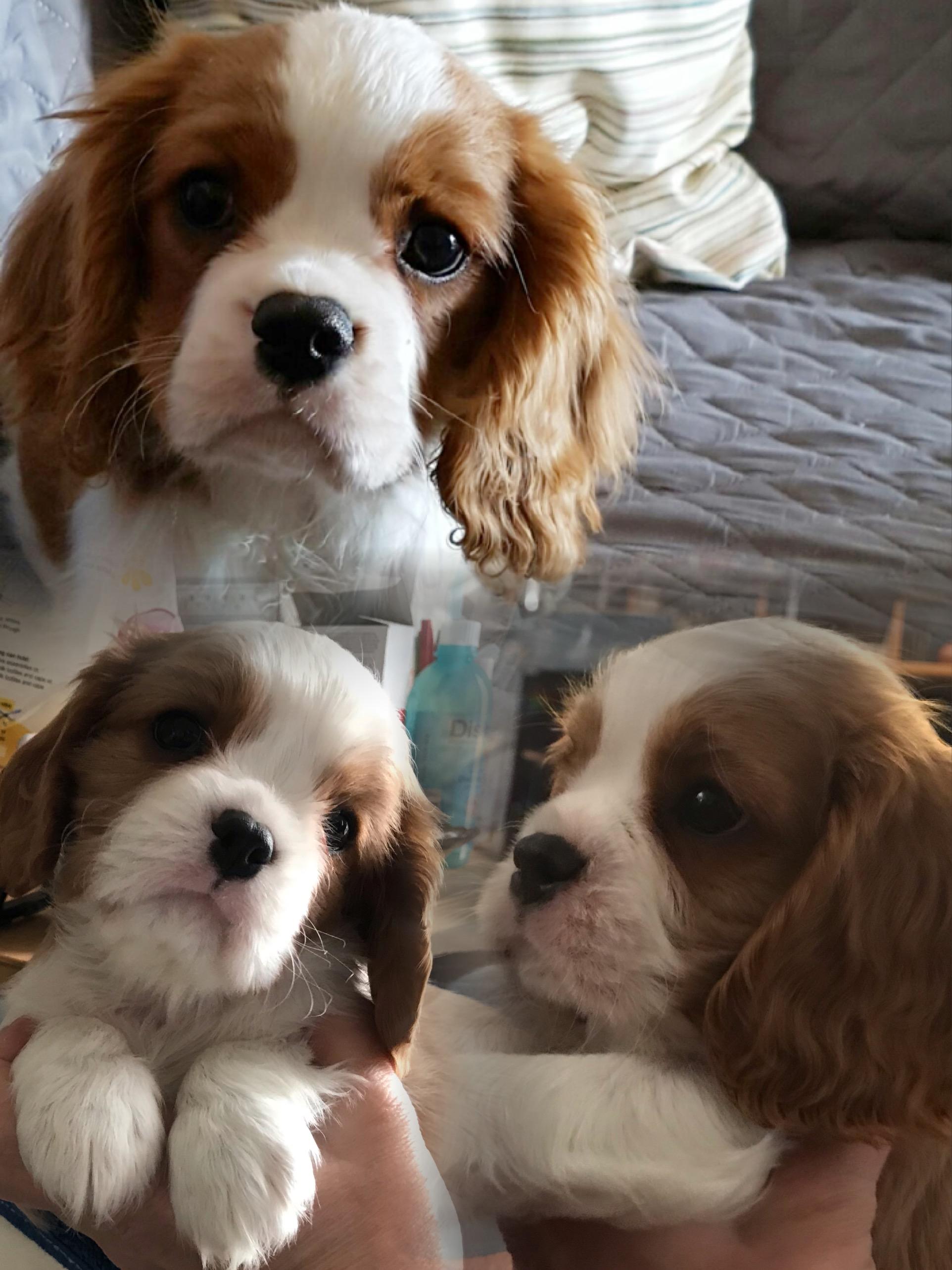Mason P., 3 mesi