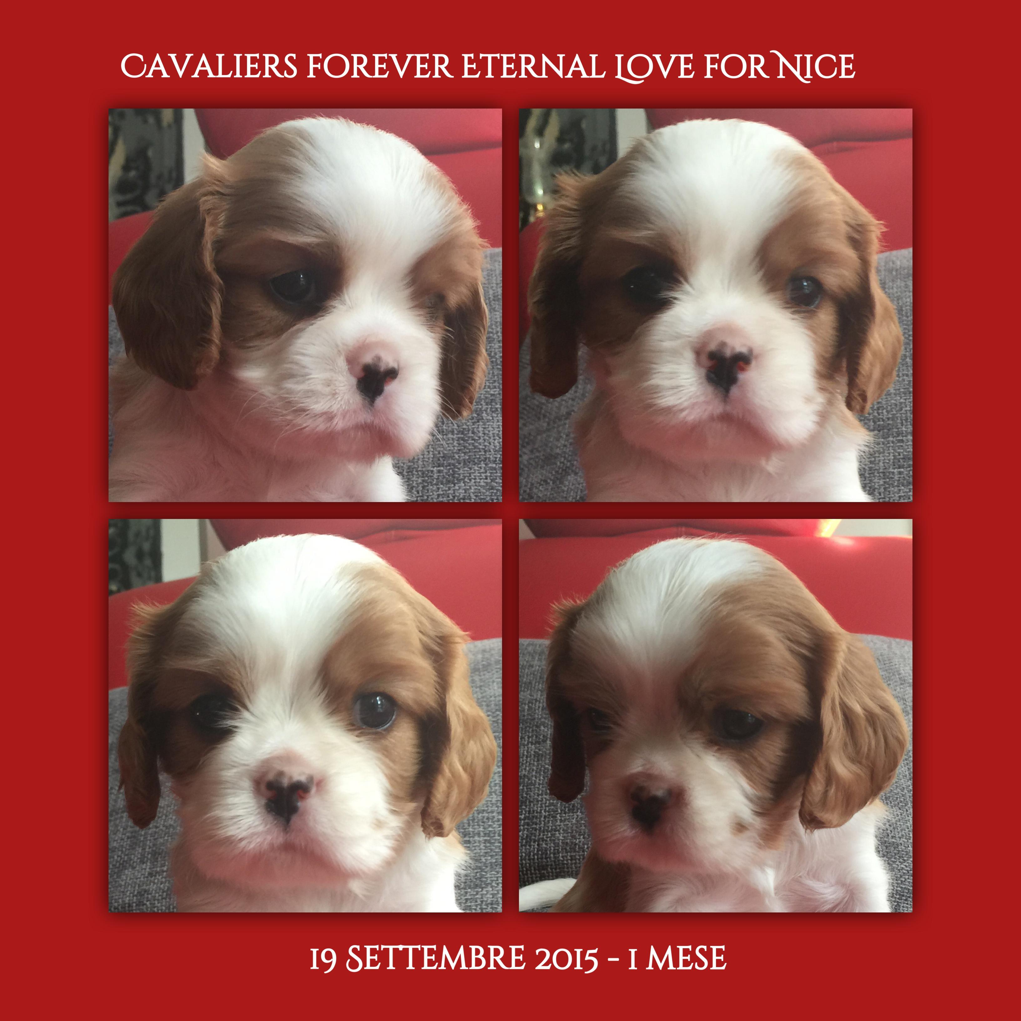 Love, Cavalier King