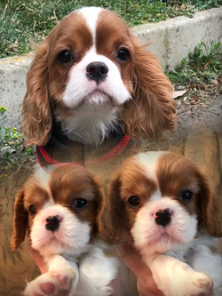 Marlowe P., 3 mesi