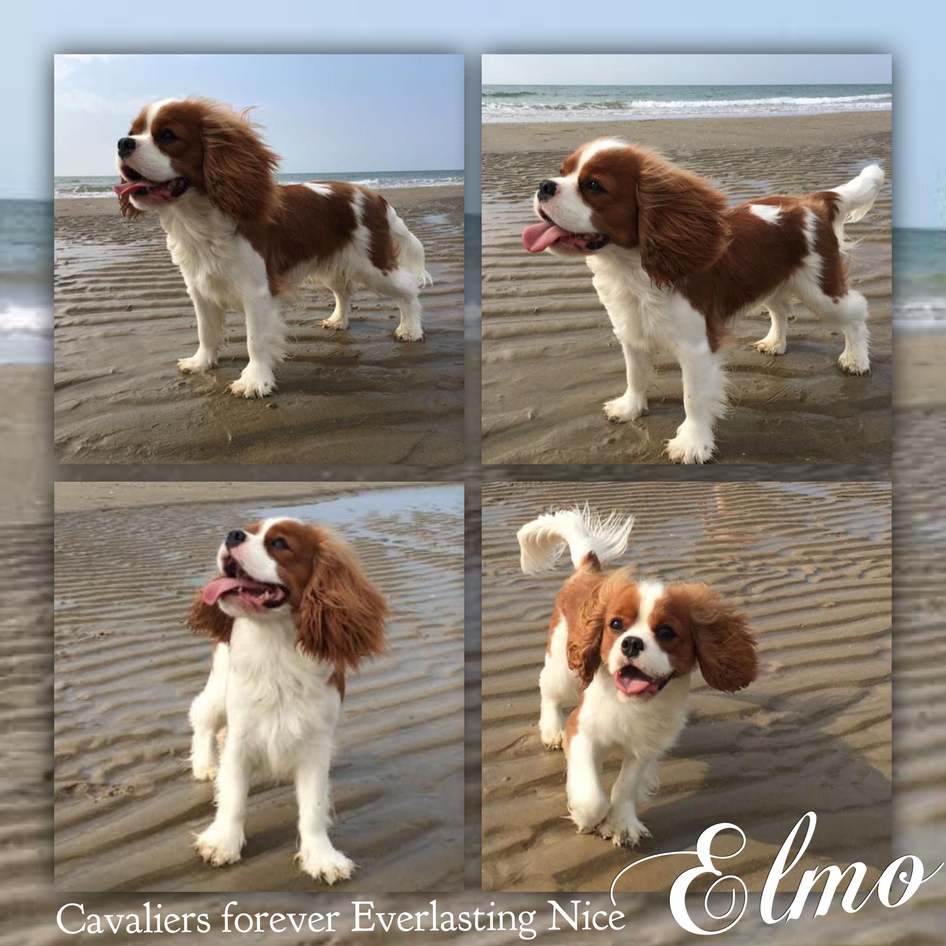 Elmo, 14 mesi