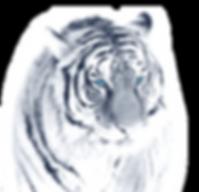 Tiger_klein_bearbeitet_bearbeitet.png