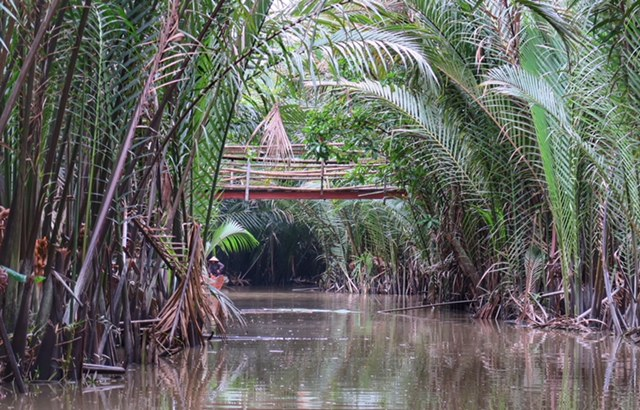 An amazing Sampan journey through the water palms.
