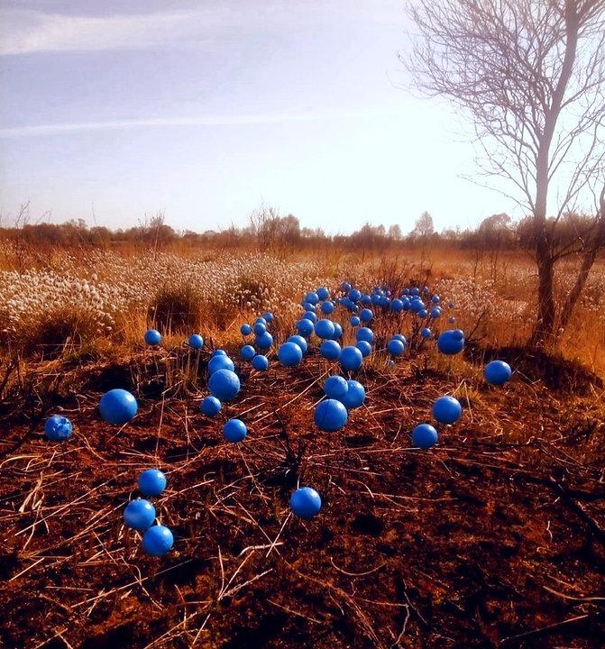 blue%2520eyed%2520grass%25201_edited_edited.jpg