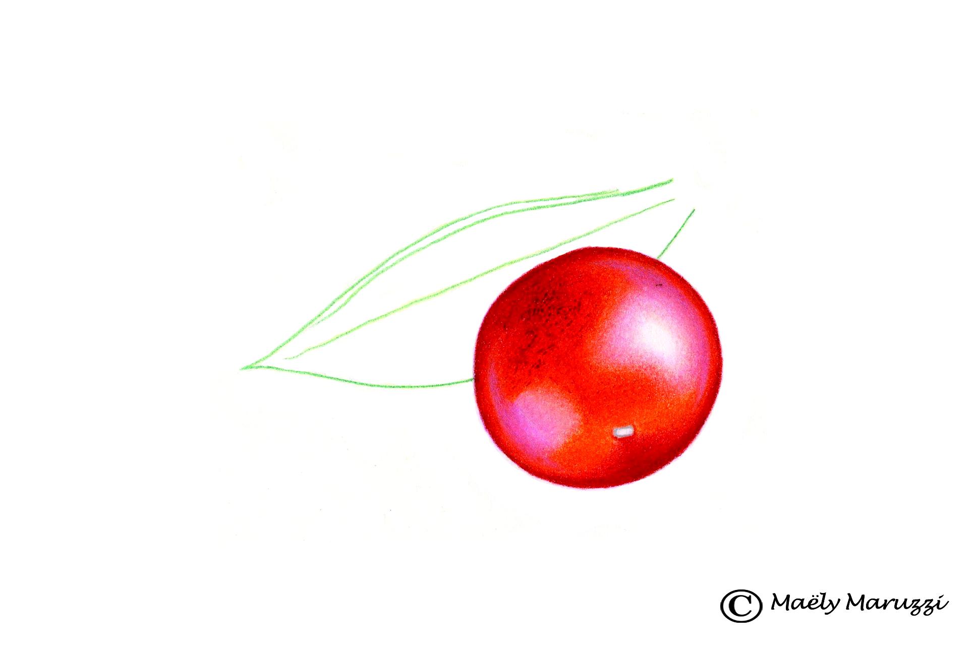 Fragon, Ruscus aculeatus
