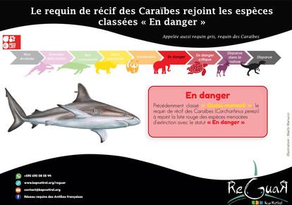 Fiche requin de récifs