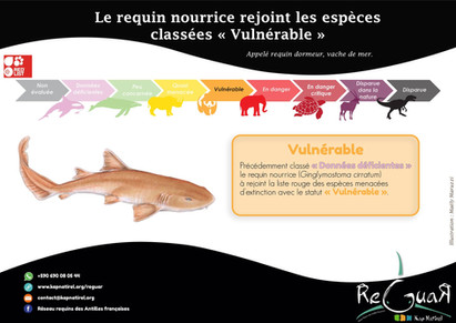 Fiche Espèce : requin nourrice