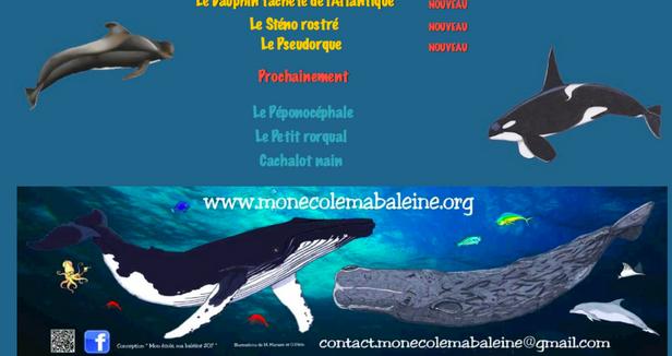 Illustrations pour le site internet