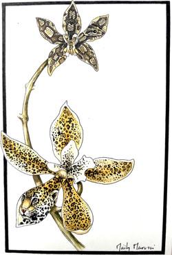Floraison mimétique