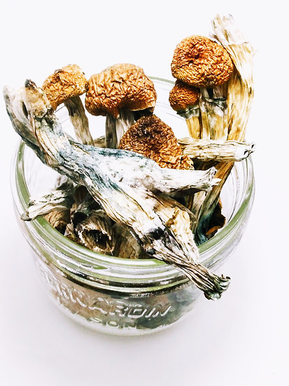 Purple Creeper Mushrooms