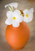 109_9024 poterie fleur alamanda.jpg