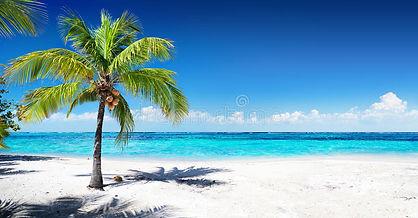 scenic-coral-beach-palm-tree-66939760.jp