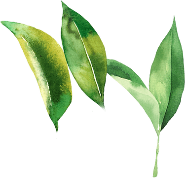 leaves-backlo.png