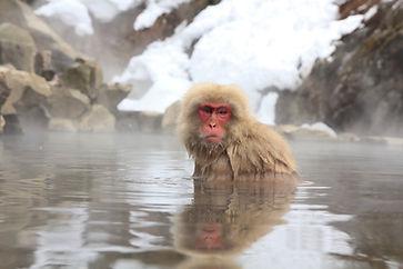 Nagano-monkeys.jpeg