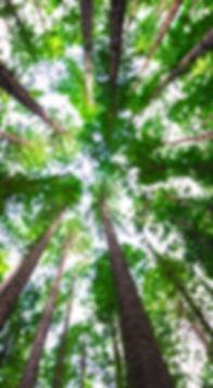 arnaud-mesureur-88560-unsplash_edited.jp