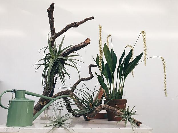 flo botany.jpg