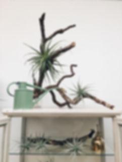 flo botany air plants NY.jpg
