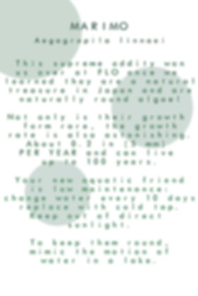 marimo_display_info.jpg
